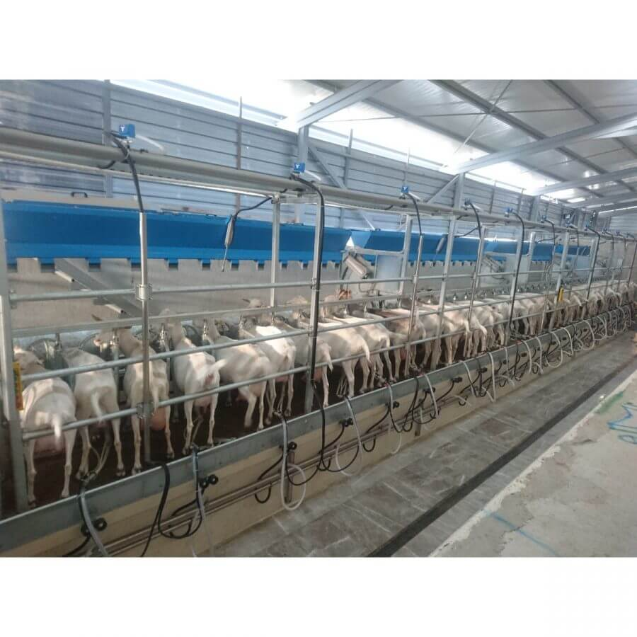 LAKTO Küçükbaş Hızlı Çıkış Süt Sağım Sistemi